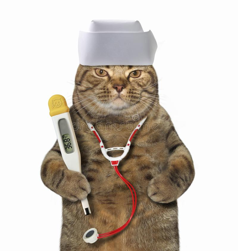 Cat doctor with medical supplies. The cat doctor in a medical hat has a clinical digital thermometer and a stethoscope. White background. Isolated royalty free stock image