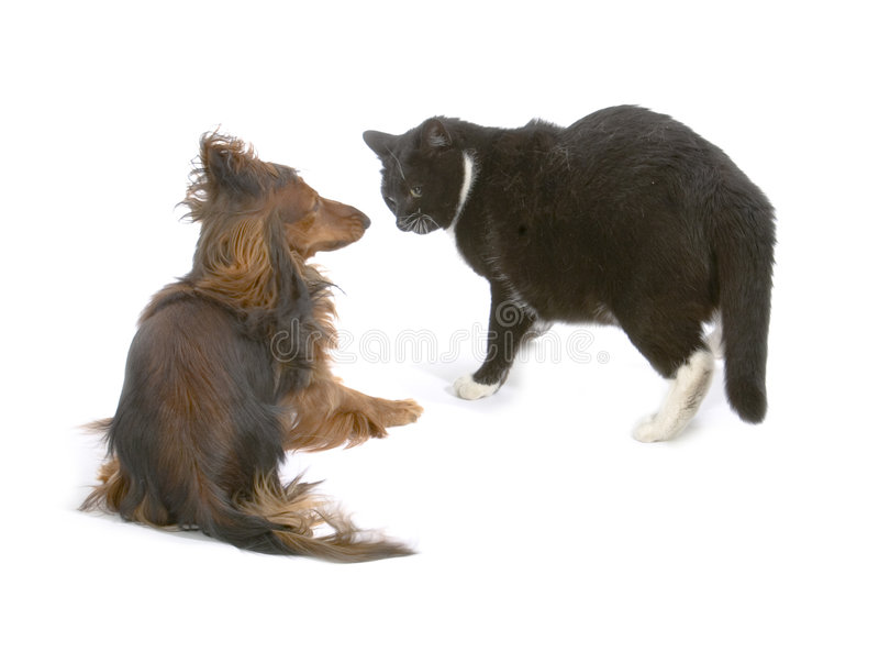 Download Cat and dog stock image. Image of friends, animal, kitty - 1010027