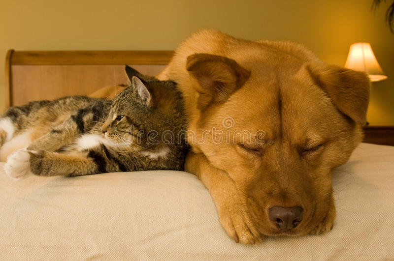 Cat and Dog. Resting on bed