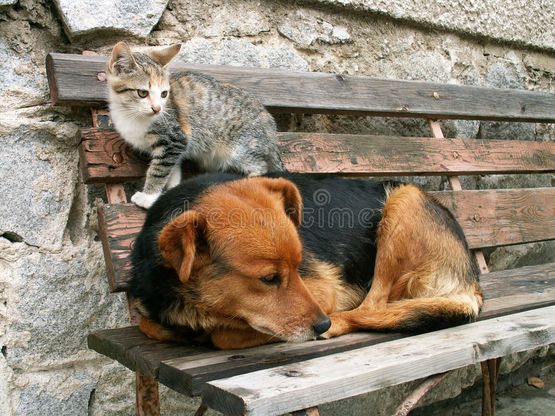 Download Cat and dog stock photo. Image of humour, kitty, portrait - 1226704