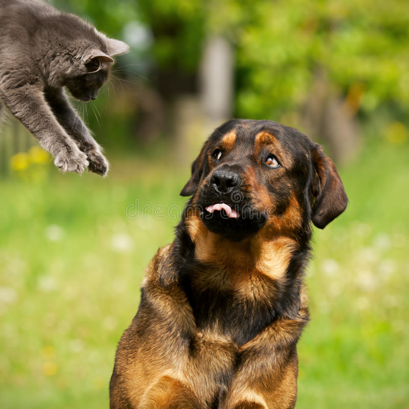 Cat and dog. A dog scared of jumping cat