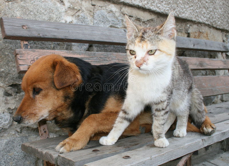 Download Cat and dog stock photo. Image of portrait, ears, domestic - 2467006