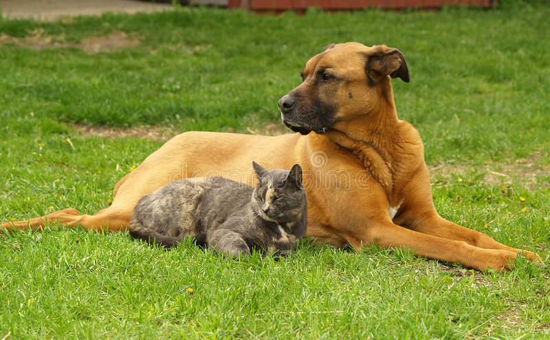 Cat and Dog. A cat and a dog lie together on the grass