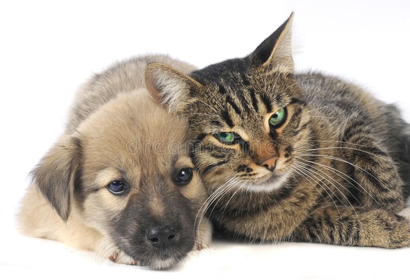 Cat and dog. On a white background stock photos