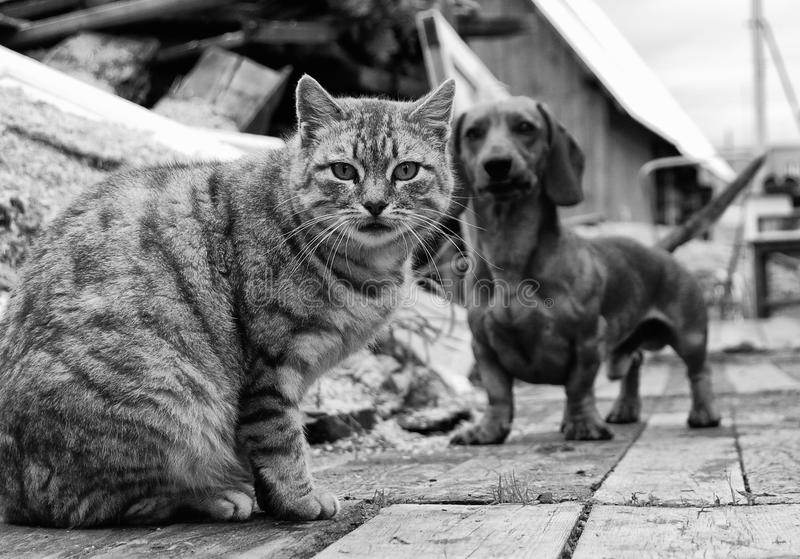 Download Cat and dog stock photo. Image of animal, cute, kitten - 28486244
