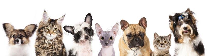 Cat and dog. Medium group of animals