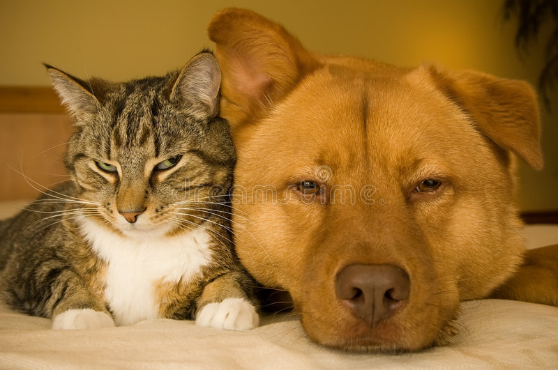 Cat and Dog. Resting together on bed