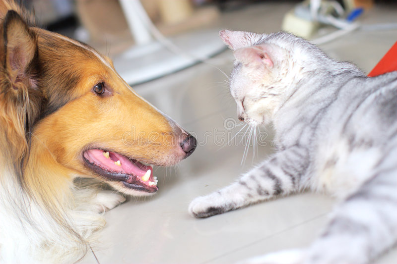 Cat and dog. The cute cat . shoot it in the pets shop royalty free stock image