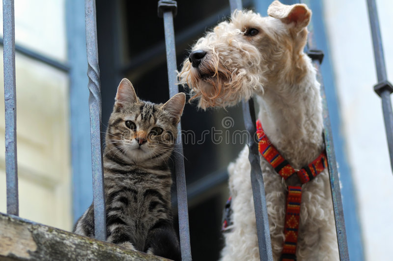 Download Cat and a dog stock image. Image of balcony, hunter, feline - 7336639