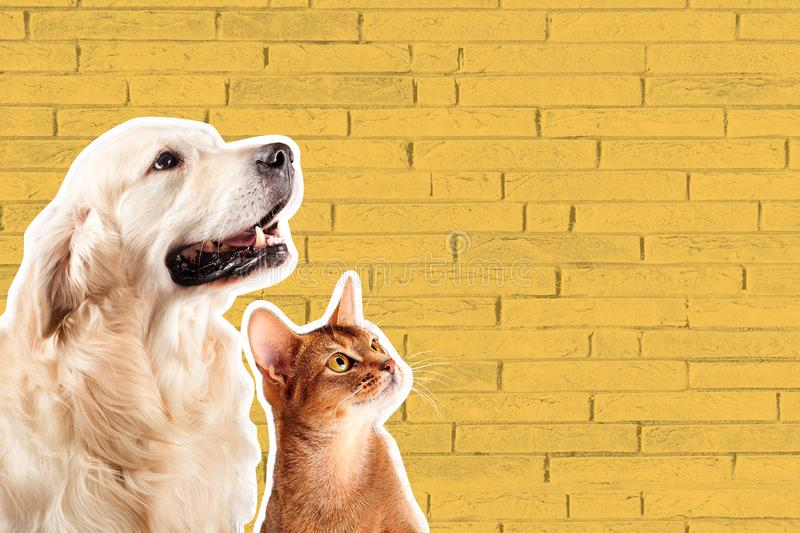Cat and dog, abyssinian kitten , golden retriever looks at right in front of yellow brick wall. Cartoon zine retro style.  stock photos