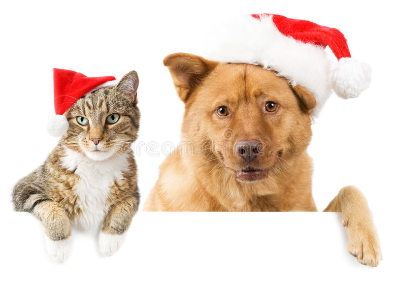 Cat and Dog banner for the holidays. Cat and Dog with red hats above white banner royalty free stock image