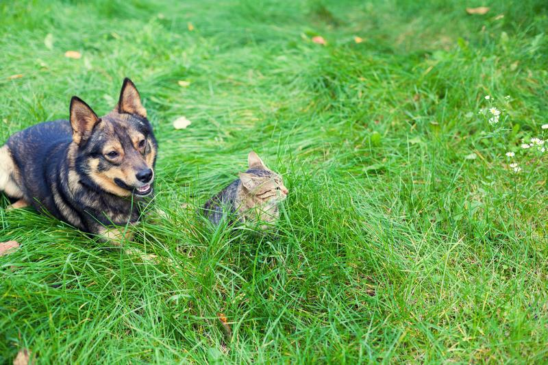 Cat and dog lie next to each other on the grass. Cat and dog - best friends, lying outdoor on the grass in autumn stock photography