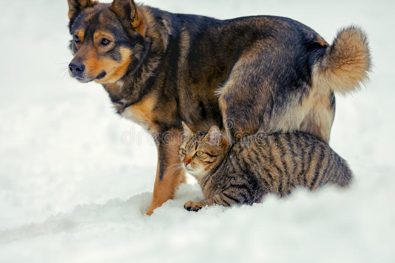 Cat and dog are the best friends stock images