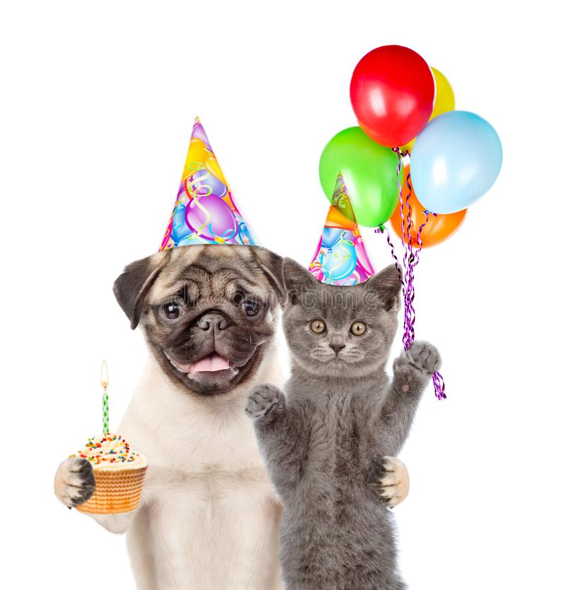 Cat and Dog in birthday hats holding balloons and cake. isolated on white background stock image