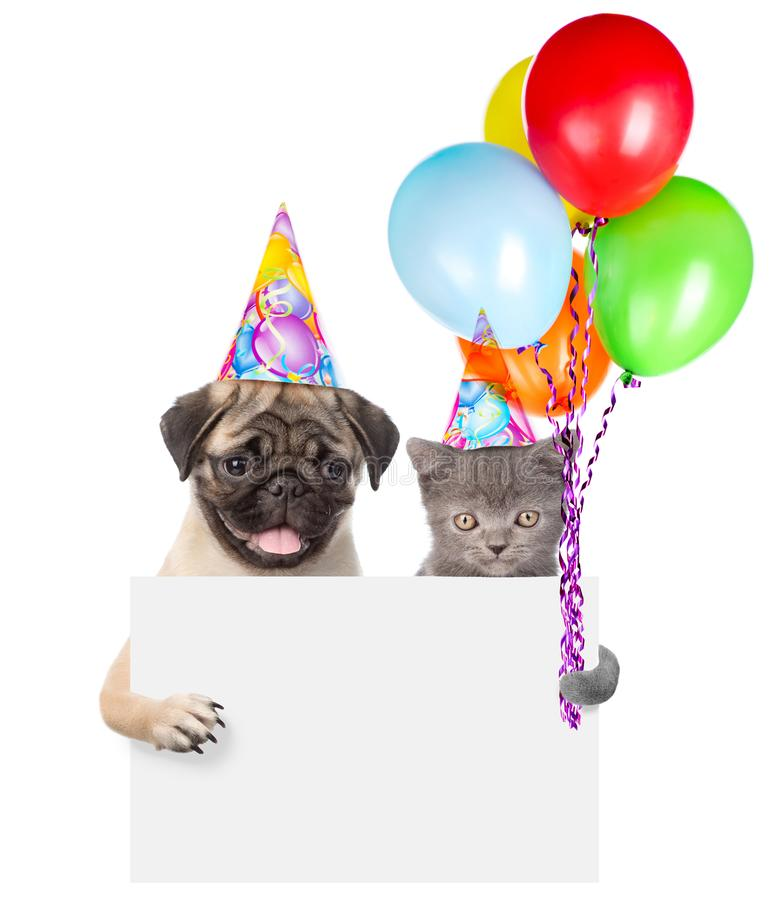 Cat and dog in birthday hats holding balloons peeking from behind empty board. isolated on white background stock photography