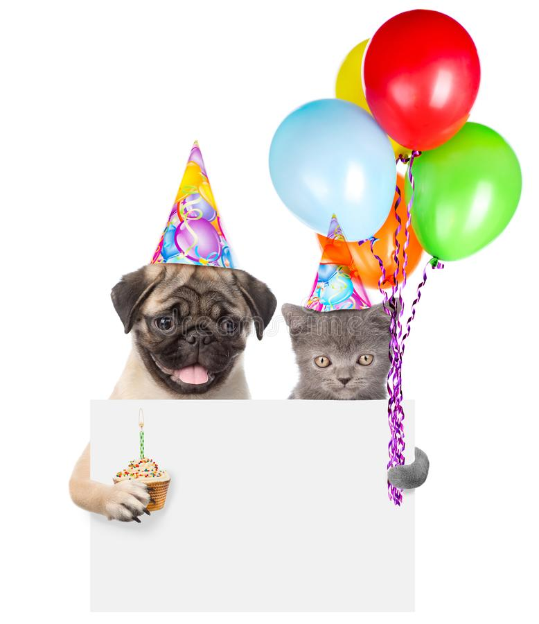 Cat and dog in birthday hats holding cake and balloons peeking from behind empty board. isolated on white background.  royalty free stock photos