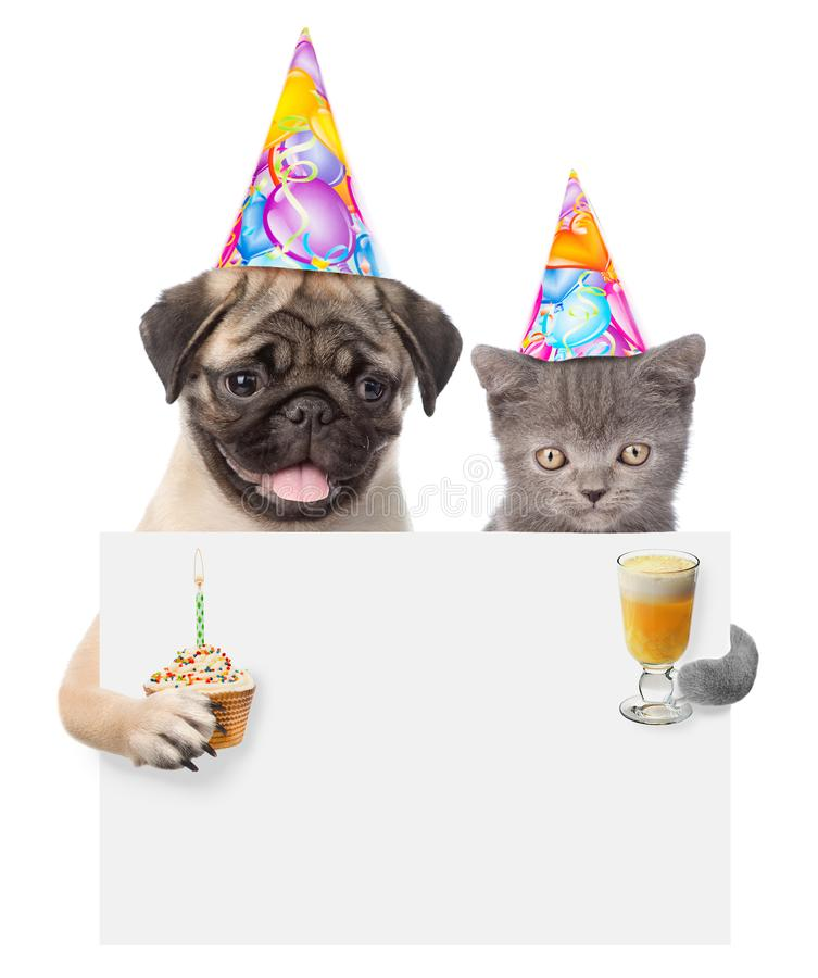 Cat and dog in birthday hats holding cake and cocktail peeking from behind empty board. isolated on white background stock image