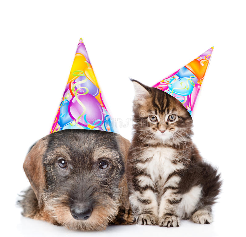 Cat and dog in birthday hats looking at camera together. isolated on white royalty free stock images