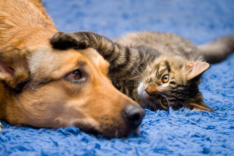Cat and dog. On the blue carpet