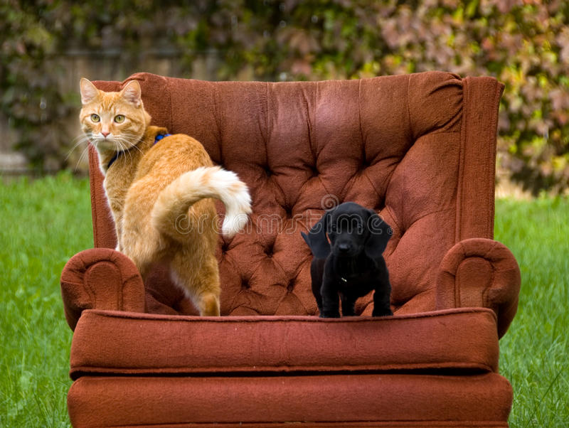 Cat dog and a chair. A cat and a dog relaxing on a chair outside royalty free stock photo