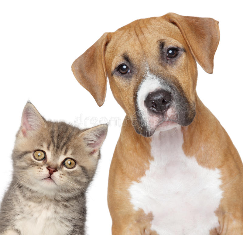 Download Cat And Dog. Close-up Portrait Stock Photo - Image: 25277814