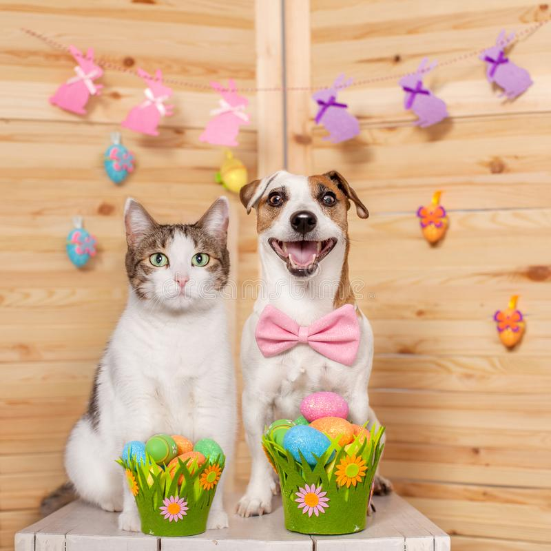 Cat and dog with easter eggs. Happy pets stock photo
