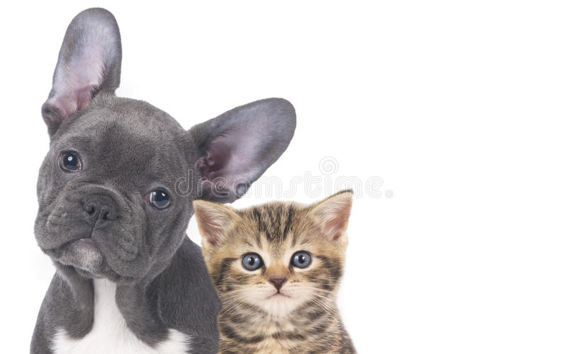 Cat and dog. Faces isolated