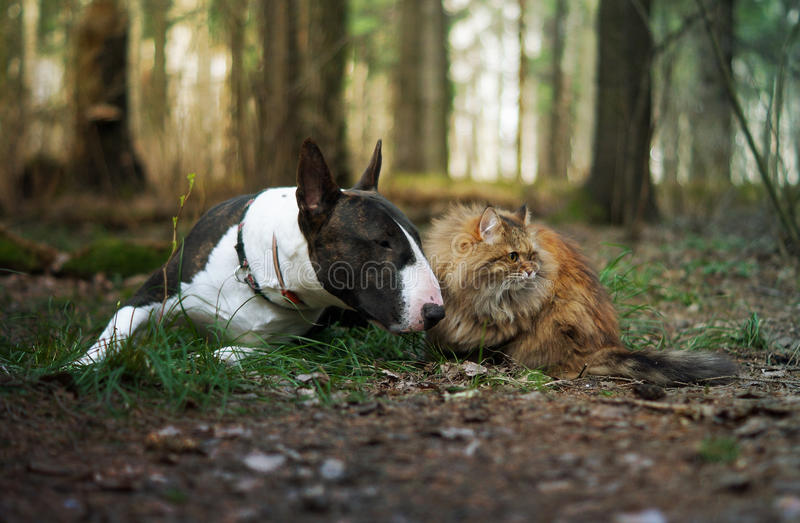 Cat and dog in the forest. Spring royalty free stock photos