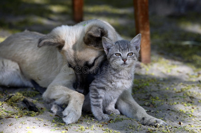 Download Cat and dog are friend stock image. Image of funny, sleep - 14505089