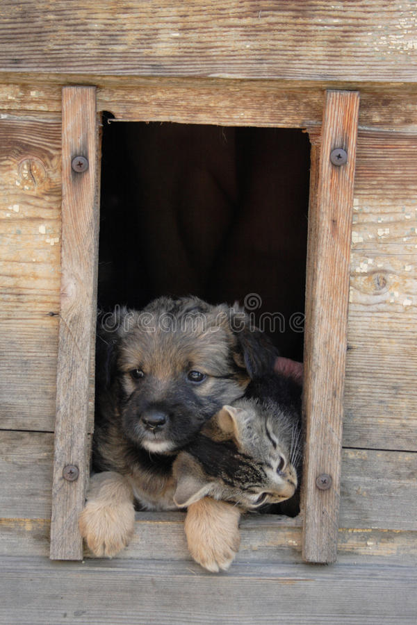 Cat And Dog Are Friends Stock Images