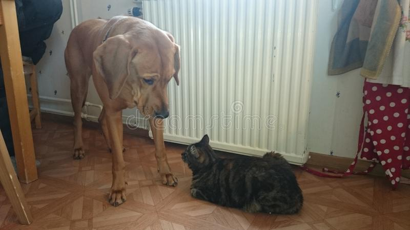 Cat dog royalty free stock photography