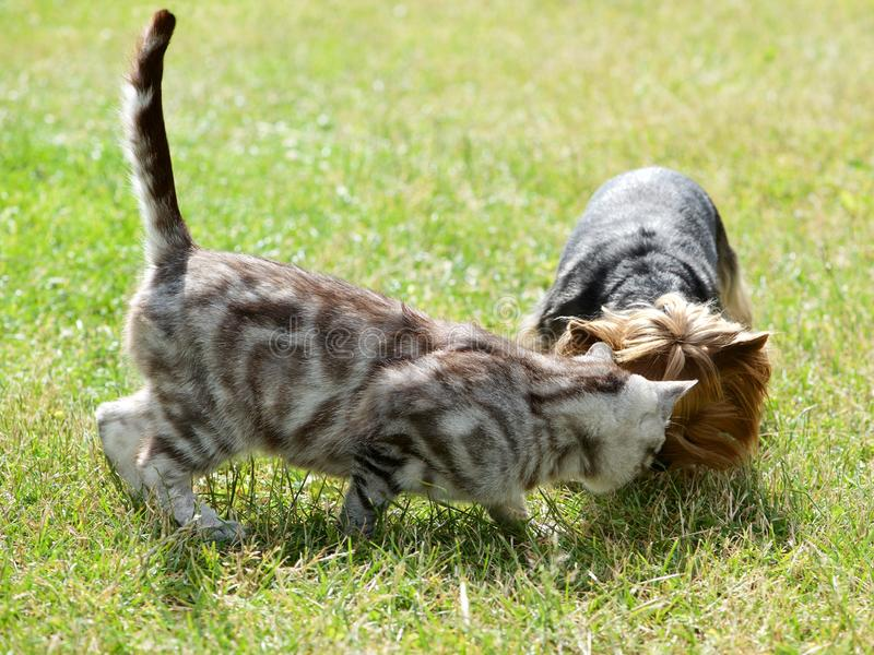 Cat and dog in the garden. Cat and dog in the green grass background royalty free stock images