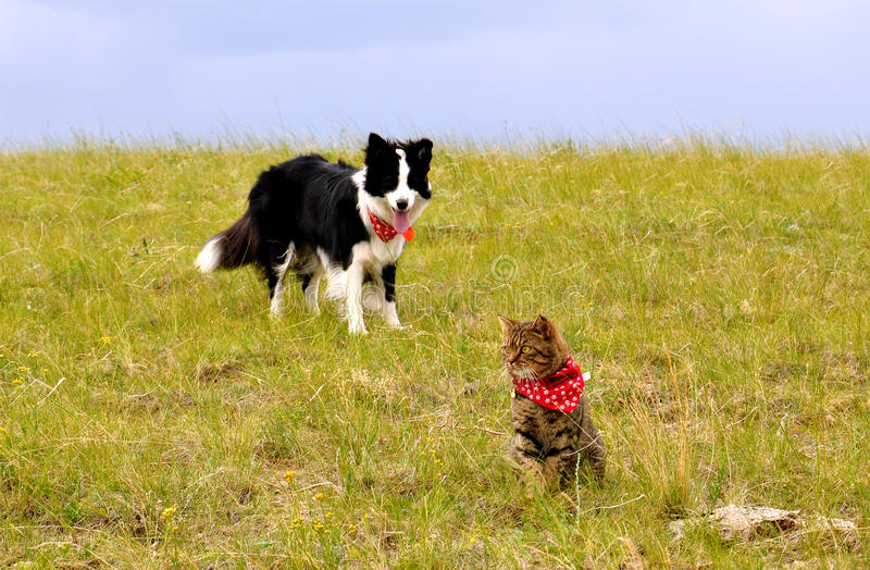 Cat and dog on the grassland. Dog and cat together on grass, sunny summer day and blue sky royalty free stock photography