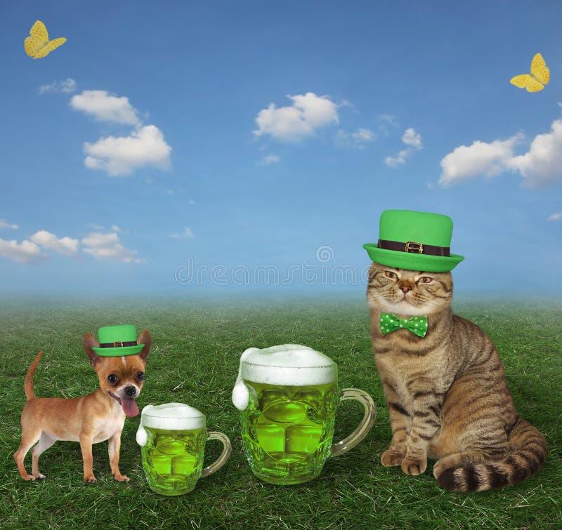 Cat drinks green beer on meadow 2 stock photos