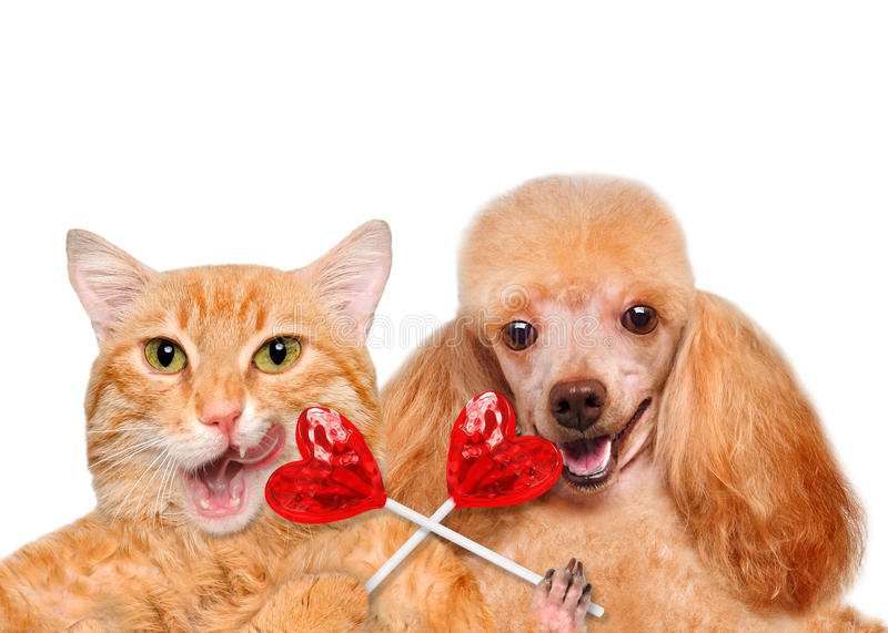 Cat and dog holding in paws sweet tasty lollipop in the shape of heart. stock photos