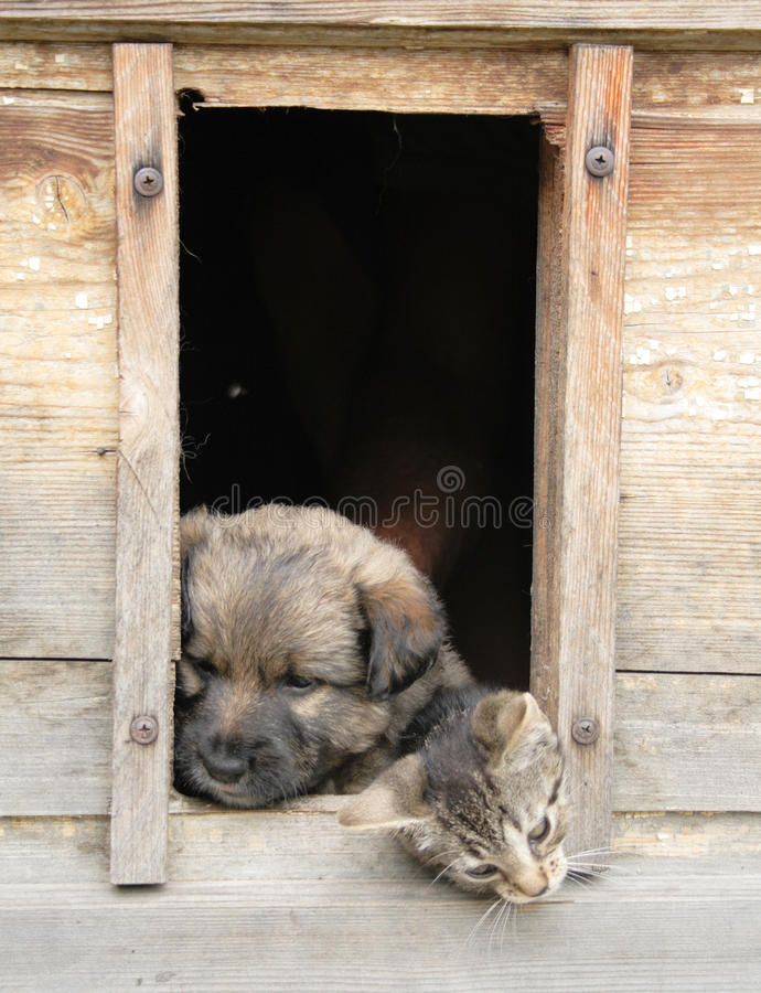 Cat and dog at home royalty free stock photos