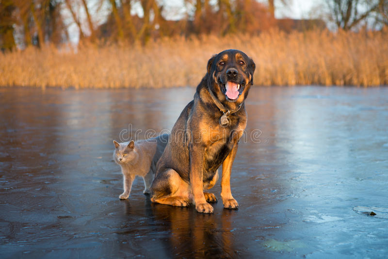 Cat and dog. On ice royalty free stock photo