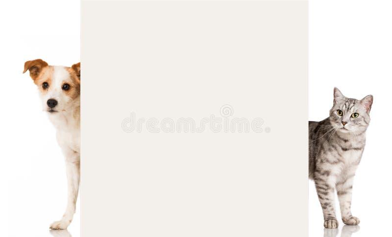 Cat and dog. Isolated on white background