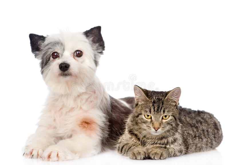 Cat and dog lie nearby. isolated on white background.  stock photos