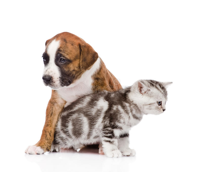 Cat and dog looking every which way. isolated on white background.  stock images