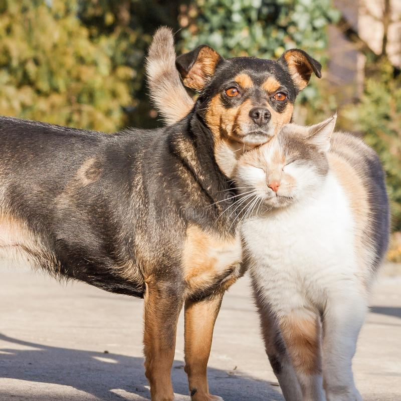 Cat and dog love, friendship stock image