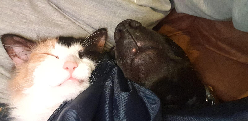 Cat dog love peace sleep love sleeping royalty free stock photos