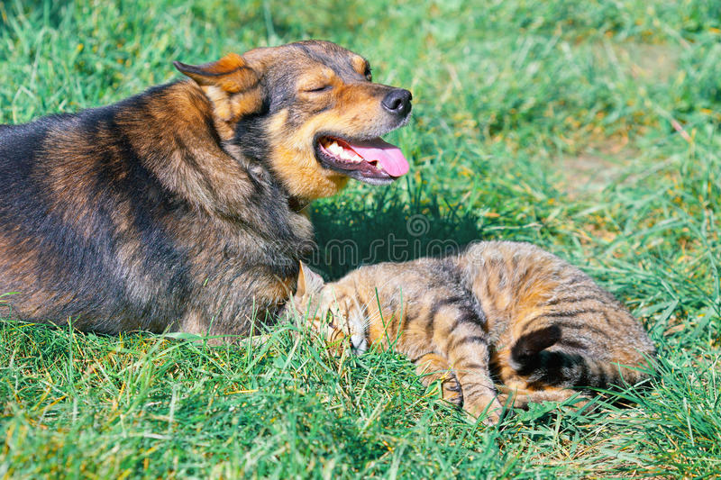 Cat and dog. Lying together on grass royalty free stock image