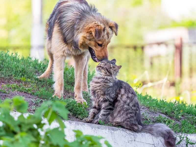 A cat and a dog next to the green grass in the summer. Cat and dog are friends_. A cat and a dog next to the green grass in the summer. Cat and dog are friends royalty free stock image