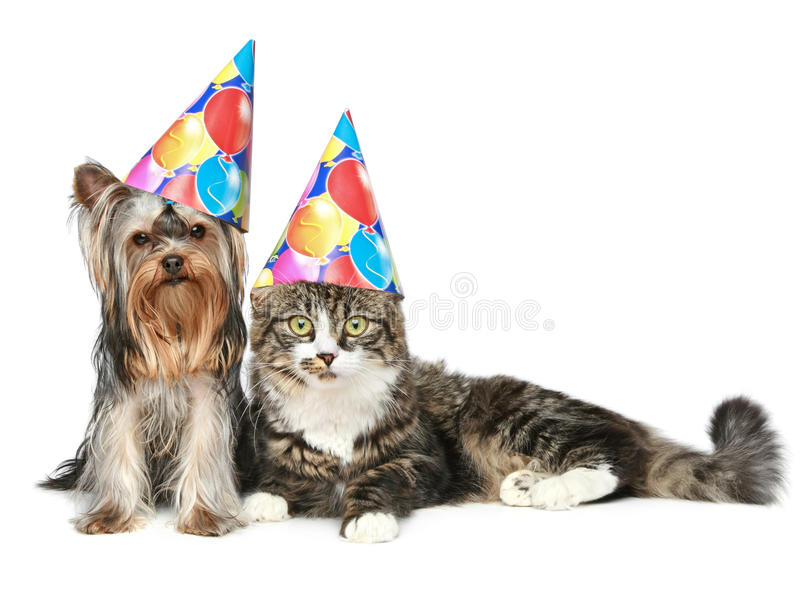 Cat and dog in party hat on a white background royalty free stock photo