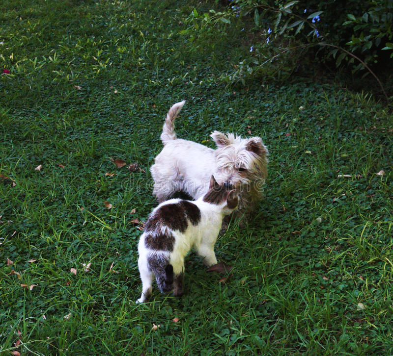 Cat and dog. Playing outside on a sunny day. they are best friends royalty free stock image