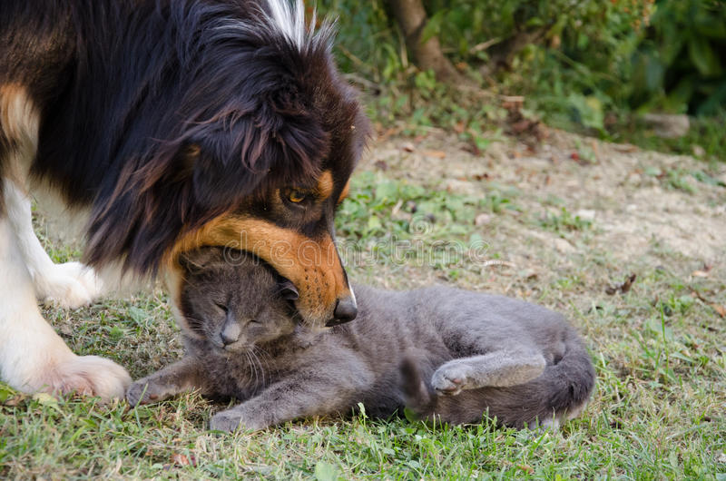 Cat and dog playing. Photo of cat and dog playing in the garden stock photography