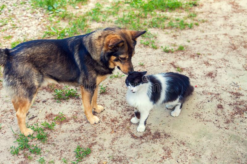Cat and dog playing together. Outdoor in autumn royalty free stock photography