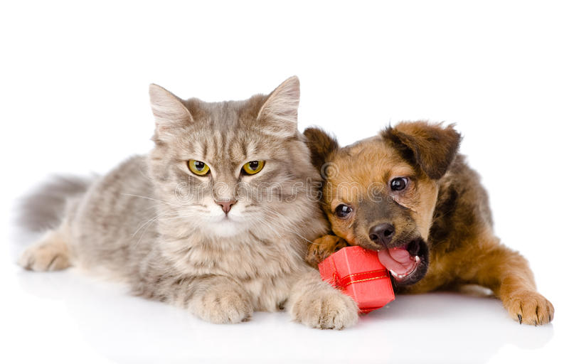 Cat and dog with red box. on white background stock photos
