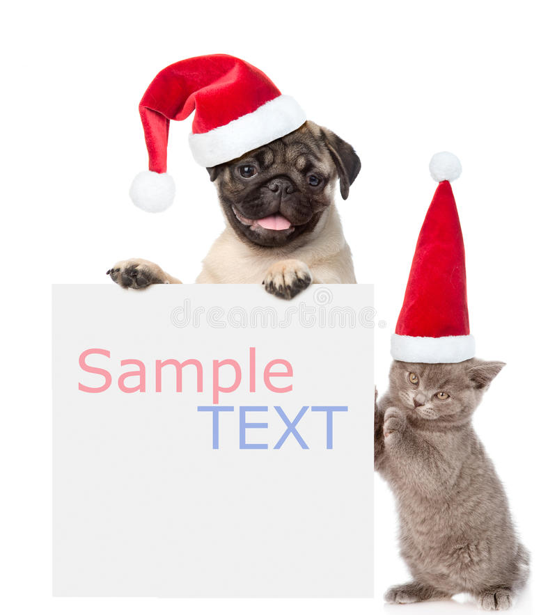 Cat and Dog with red christmas hats peeking from behind empty board and looking at camera. isolated on white background.  royalty free stock photos